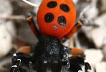 Animals ~ INSECTS / #Animals, #Insects, #Bugs. I can't say I like bugs, but would never like to kill them either. All beautiful.