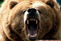 Animals ~ BEARS / #Animals, #Bears, #PolarBears, #Koala. Definitely not average Teddy bears :)
