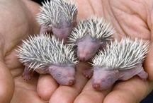 Animals ~ BABY / #BabyAnimals. Such as cute animal babies.