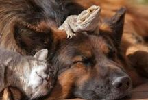 Animals ~ FRIENDS / #Animals, #Friends, #UnlikelyCouples. Can we?