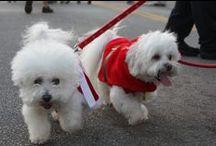 Pet Friendly / downtown is a pet friendly community