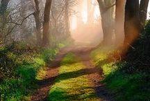 Beautiful Portals / Follow Me!