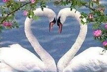 Love Birds / How wonderful is this....we can sure learn from them!
