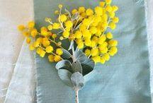 Vriendin • Mimosa / Zo mooi zijn mimosa
