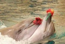The beauty of Dolphins / Wonderful creatures