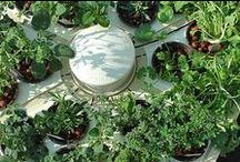 Hydroponics / Everything you need to know to get started with hydroponic gardening.