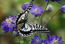 butterflies / by Irina Piedrola Enrique