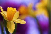 Цветы. Flowers / Каждый цветок - это другой мир, загадочный, заманчивый и невероятно прекрасный. Приглашаю в другие миры. Цветы на фото, цветы в букетах.