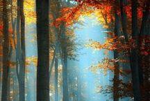 Осень. Fall / Молчаливый гость… В кресле посидев, ушло Осеннее солнце. (Юрий Рунов)