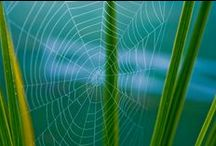 Кружева паутин. Web / Призрачное ускользающее тонкое паутиновое счастье