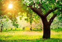 Солнечность. Sunniness / Между листьями свет, между ветками свет… Ничего, кроме света на свете и нет, (Л. Миллер)