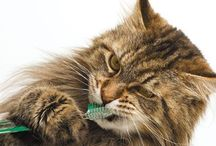Dental Health / A healthy mouth is important for your pet's wellness / by Ambassador Animal Hospital