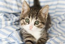 Yaas / CAT'S