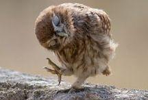 Сова. Owl