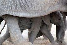 Детеныши животных с мамами - Children of animals and their mums