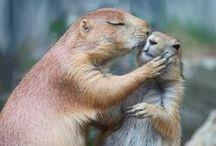 Животные и любовь - Love of animals