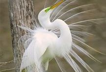 Лебеди, цапли, журавли, аисты. Swans, herons cranes storks