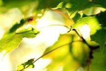 Зеленое и желтое_Green & Yellow
