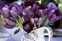 Garden glam / Gardening design  / by e p