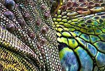 Brugklas: Structuur/Textuur/Patroon / Voorbeelden bij begrippen Structuur, Textuur, Patroon