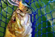 Fishing / by Adrian Hernandez