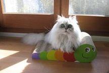 Foto dei clienti / Cani e gatti con i loro prodotti preferiti