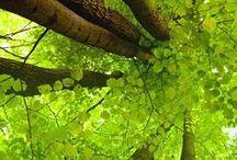 Drzewa/Trees
