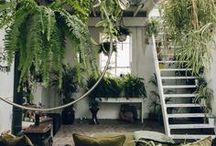 Indoor Plants & Flowers / Ideas and inspirations on a myriad of plants and flowers to adorn and beautify your home | indoor plants, indoor plants inspiration, indoor plant ideas, indoor plant tips, interior design, interior decor