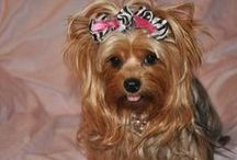 DIY Dog Bows / Adorable DIY dog bows and ideas for your fur baby!  Use Bowdabra to make these crafts a cinch!  (Crafting made easier using Bowdabra - the craft tool to unleash your creativity!) / by Bowdabra @Bowdabra.com
