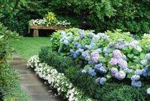 garden inspirations / by Terran Sims