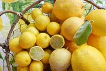 Lemons! / Anything that uses lemons is like sunshine in my day! / by Cottage at the Crossroads