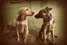 My Pets / My bestie pals