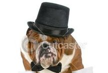 Animals in Costumes / by Cutcaster Stock Images