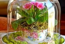 Cloche Encounters / Everything looks better under a cloche! / by Cottage at the Crossroads