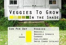 Home Grown - Gardening Tips / Veggie & fruit gardens, raised garden beds, watering & soil tips, etc.
