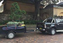Moving Pot Plants in Sydney CBD