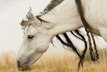 chevaux / horses / beauté