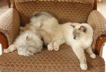 mes chats à moi / Les chats en famille