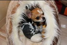 Joy ma  Chichi / Mon ptit chichi à moi ! My puppy