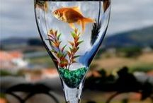 Fabulous Fish / Tanks and Fish / by Marcia Williamson