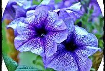 Çiçekler / Birbirinden güzel çiçekler burada...