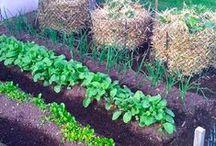 Gardening / by Deb Bishop