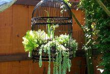 Garten & Pflanzen / Next Projekts