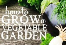 Gardening. . . with a Black Thumb / Garden Info! I'm trying to turn my black thumb into a green one.
