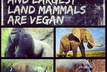 Best Vegan Memes / A collection of the best Vegan Memes touching on the vegan lifestyle. The best board for a funny vegan meme or for stating facts and research on veganism.