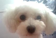 Wendy, my dog