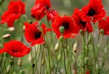 Flowers-¡nos encantan las flores! / Flores de todos los colores, tamaños y aromas: son todas bellísimas!!!