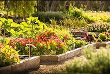 Jacob's Creek Productive Garden