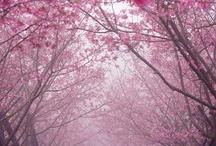 Nature_Landscape