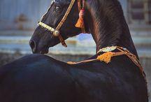 Horses / by Camrie Hansen